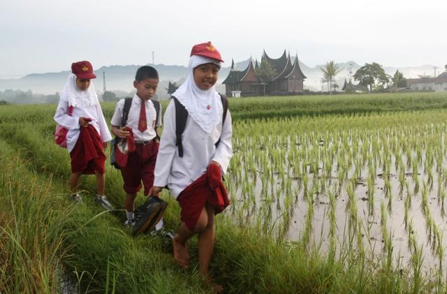Beberapa murid seklolah dasar (SD) yang akan mengikuti ujian nasional berjalan di pematang sawah menuju sekolahnya di Nagari Balai Gurah, Kec. Ampek Angkek, Kab. Agam, Sumbar, Senin (7/5